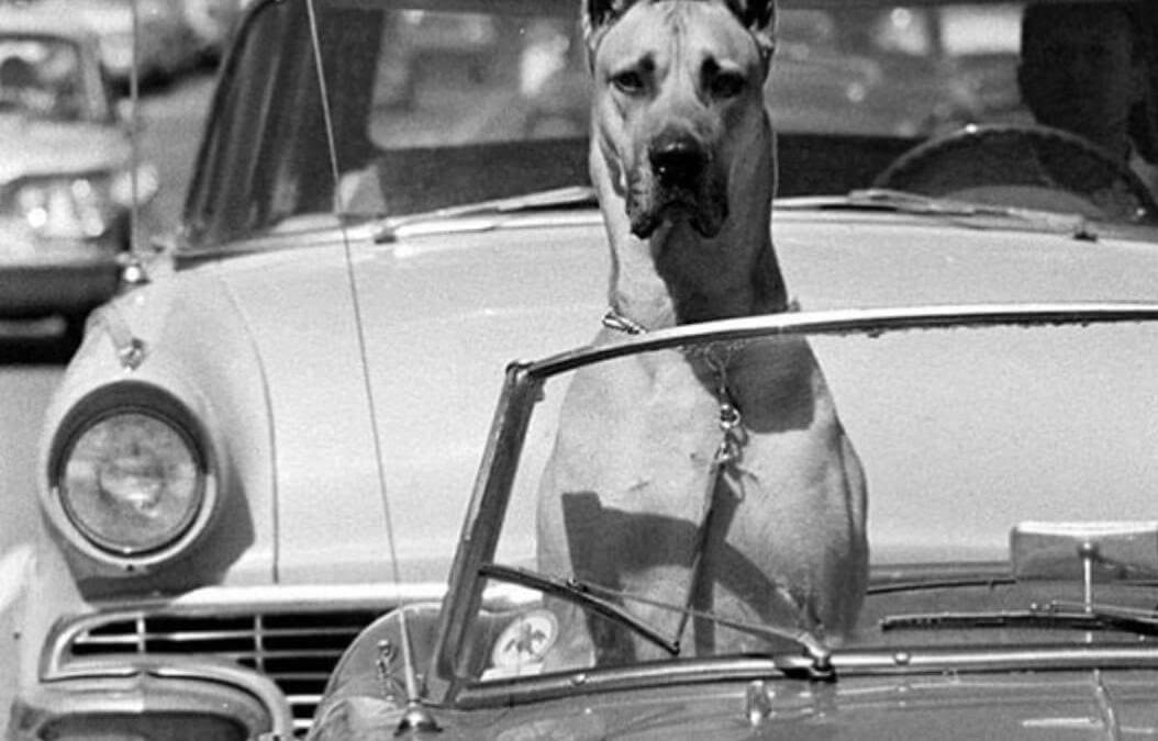 Pets and Cars